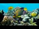 Подводный мир Макади, Красное море, Египет. Underwater World of Makadi, Egipt 2015. 4K