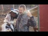 Животные поют The White Stripes - Seven Nation Army