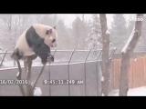 Самое странное животное