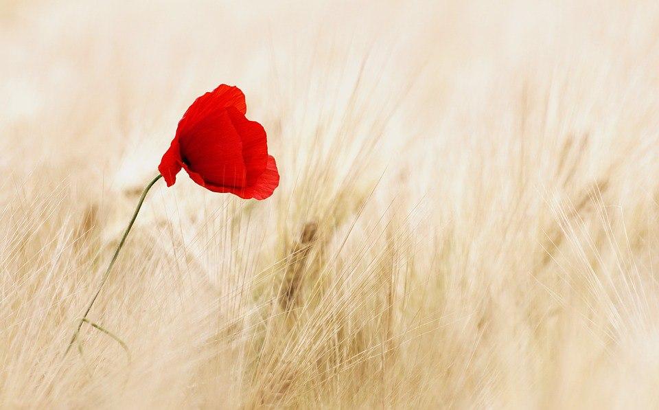 Цветочный минимализм: 20 бесплатных фотографий в вашу коллекцию