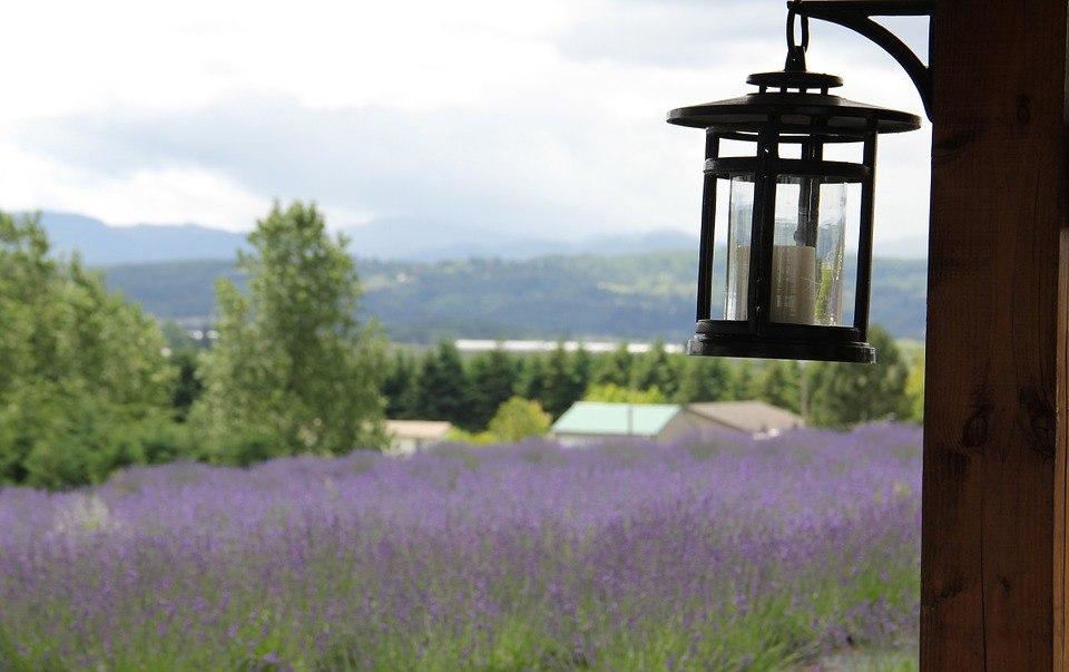18 бесплатных фотографий с ароматом лаванды и очарованием прованса