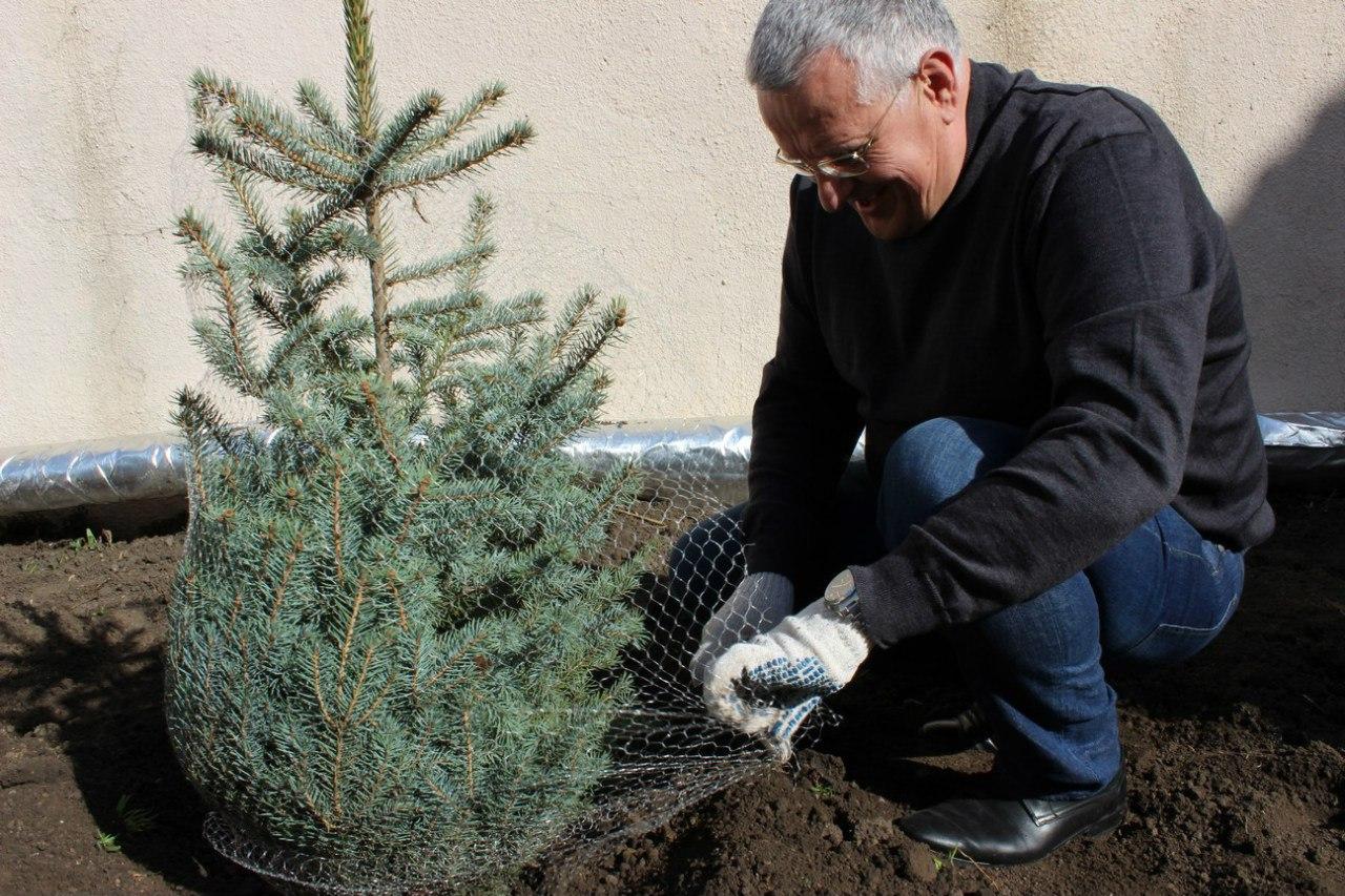 Ветеринарные врачи Ростовской области приняли участие в празднике древонасаждения