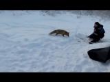 Самые смешные видео про животных Случай на зимней рыбалке