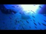 Гонка на вымирание (Discovery Channel) 1 Серия 2015