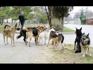 Липецк видео ответ защитникам бездомным собакам Репост поста если за отстрел...