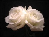Un amor asi - Jose Feliciano y Lani Hall
