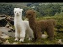 ТОП 10 Самые УДИВИТЕЛЬНЫЕ необычные животные в мире планеты