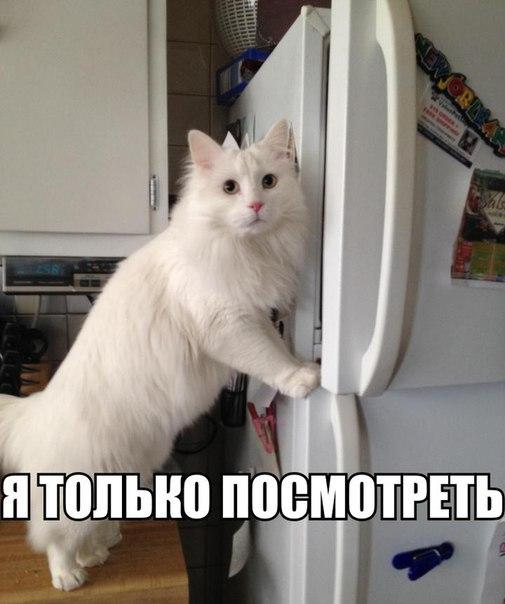 http://cs630216.vk.me/v630216576/b844/WArZYx0kJAo.jpg
