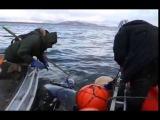Охота на серых китов, Своими глазами, передачи и документальные фильмы