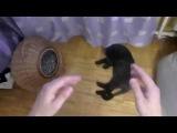 рэп баттлю своего кота Валентина