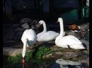 Зоопарк Птичье царство г. Грайворон