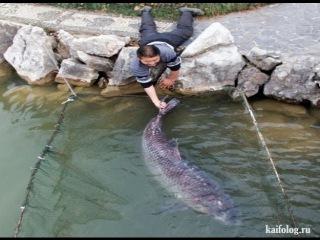 Рыба утаскивает рыбака в воду | Подборка шокирующих моментов на рыбалке. Неуклюжая рыбалка.