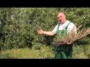 Ржавчина на листьях плодовых деревьев. Методы борьбы