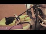 Поющая кошка и ее первый хит