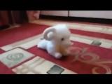 Купила ребенку игрушку, смеялась до слез)))