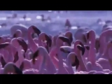 Didier Marouani - Space opera, part 3 video kLip
