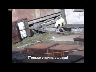 На девушку напал Белый медведь