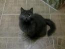 Прикольные кошки Говорящий кот жгет Забавно смотреть!