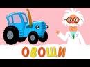 ОВОЩИ - Развивающая песенка мультик про полезную еду и синий трактор для детей м ...