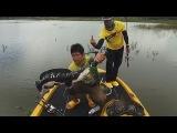 Рыбалка в Таиланде   Гигантский змееголов