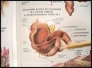 Академик Уголев: Теория адекватного питания