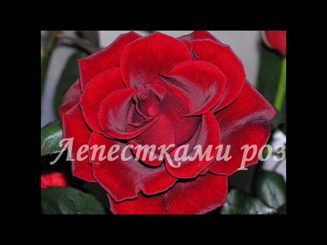 Андрей Ковалев - Лепестками роз FreshTunes Правообладатель
