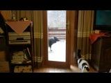 Пес открывает дверь коту