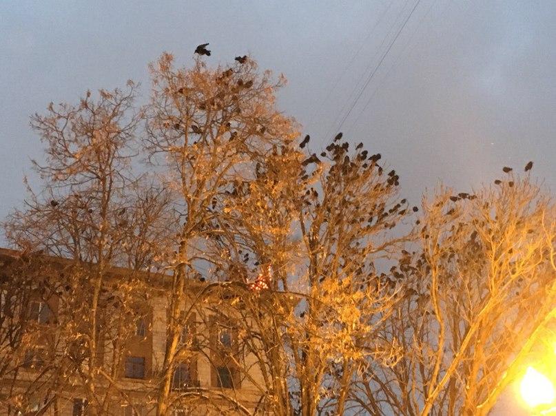 Павел Доказов | Волгоград