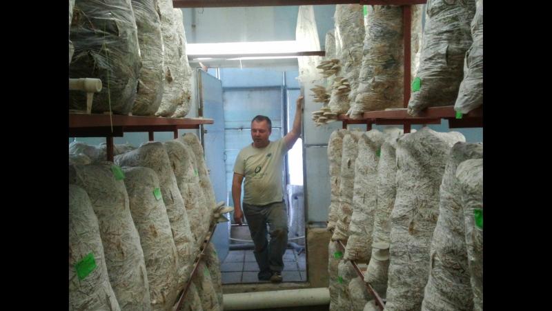 Технология Выращивания Вешенок (technology for growing oyster mushrooms)