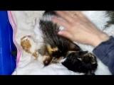 Ритма заботливая кошка-мама.