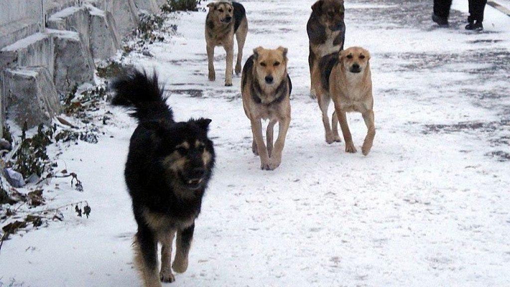 Во время праздников пятеро жителей Ростовской области обратились в ветеринарную службу по факту укусов животными