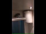 Случайно залетевший в квартиру попугай шокировал хозяев.