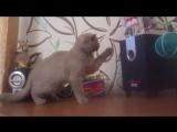 Кот и сабвуфер (6 sec)