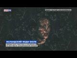 Певица SOLEY выступит в Петербурге на фестивале скандинавской музыки