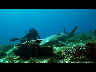 Liquid Motion Photo & Film Academy Guest Karan Saini's first underwater film: