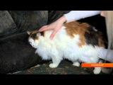 U news. Кошке Брусничке требуются средства на операцию.