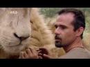 Львиный рейнджер / The Lion Ranger. 03. Смерть в царстве белых львов / Death in the kingdom HD