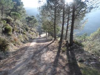 (3)Дорога по склону горы с сосновым лесом, горы Михас, Андалусия, 18 ноября 2015 г