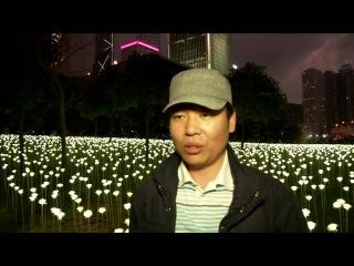 25,000 rose lights illuminate Hong Kong for Valentine's Day