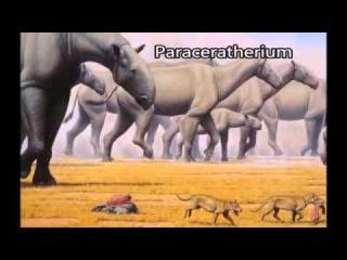 Dünya'nın En Büyük 10 Hayvan Türü
