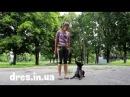 Часть 1 что делать если пес прыгает на вас как отучить прыгать на людей