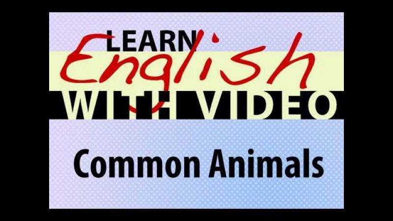 Learn English with Video - Common Animals