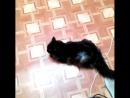 Говорящая кошка.