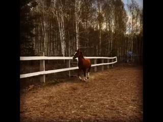 Когда за оградой Дарик и лошади в леваде