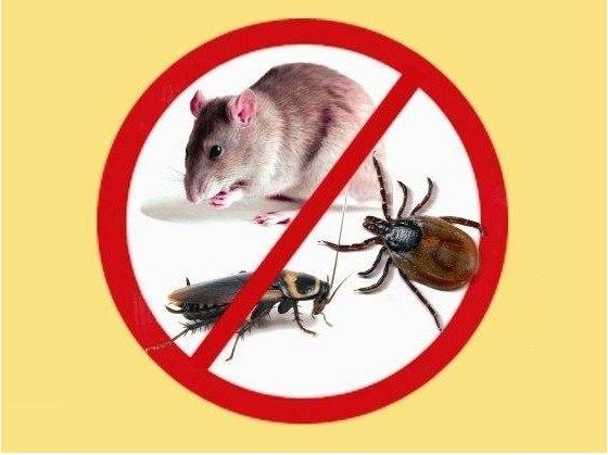 реферат на тему: профилактика инфекционных заболеваний 4