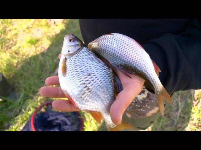 Рыбак Рыбаку 541 Сурская красноглазка.