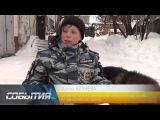 Бродячие собаки в Нижнекамске.