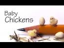 DIY Миниатюрные цыплята