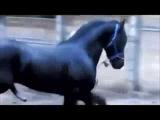 Спаривание лошадей УЖАС