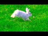 Baby Bunny Rabbit Running Outside in My Backyard